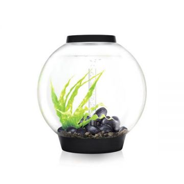 biOrb CLASSIC 60 LED Tropical  - Black