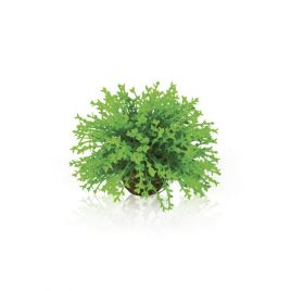 Biorb Green Topiary Ball
