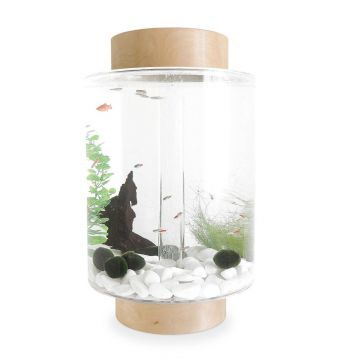Norrom Aquarium with Natural Birch Lid and Base (White stones)