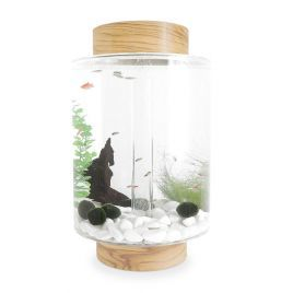 Norrom Aquarium with Olivewood Lid and Base (White stones)