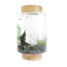 Norrom Aquarium with Olivewood Lid and Base (Black stones)