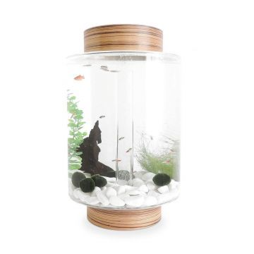 Norrom Aquarium with Zebrano Lid and Base (white stones)