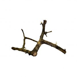 ProRep Black Acacia Branch Large