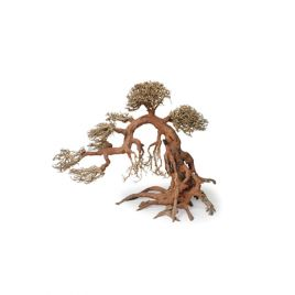 Bonsai Wood Height 15-18cm Length 20-22cm