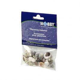 Hobby Sea Shells Small (20 Pieces)