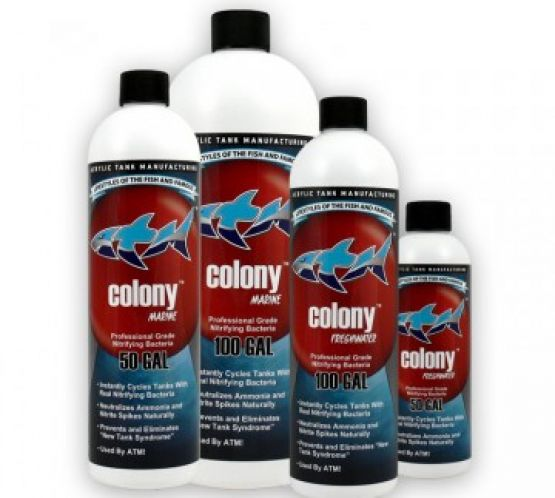 atm colony nitrifying bacteria saltwater 946ml 32oz charterhouse