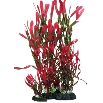 Hugo Kamishi Corkscrew Valissneria Red and Green 40cm