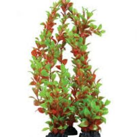 Hugo Kamishi Ludwigia Red and Green 13cm