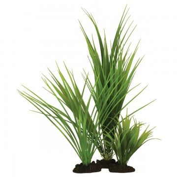 Hugo Kamishi Variegated Rush Grass 30cm