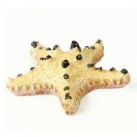 Natureform Artificial Choc Chip Starfish