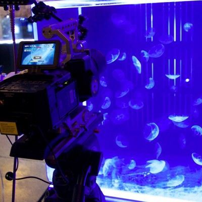 Moon Jellyfish to feature on BBC Documentary . . . .