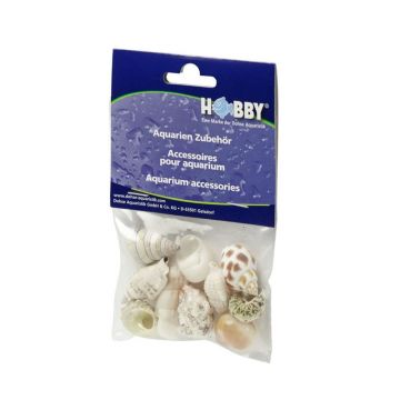 Hobby Sea Shells Medium (10 Pieces)