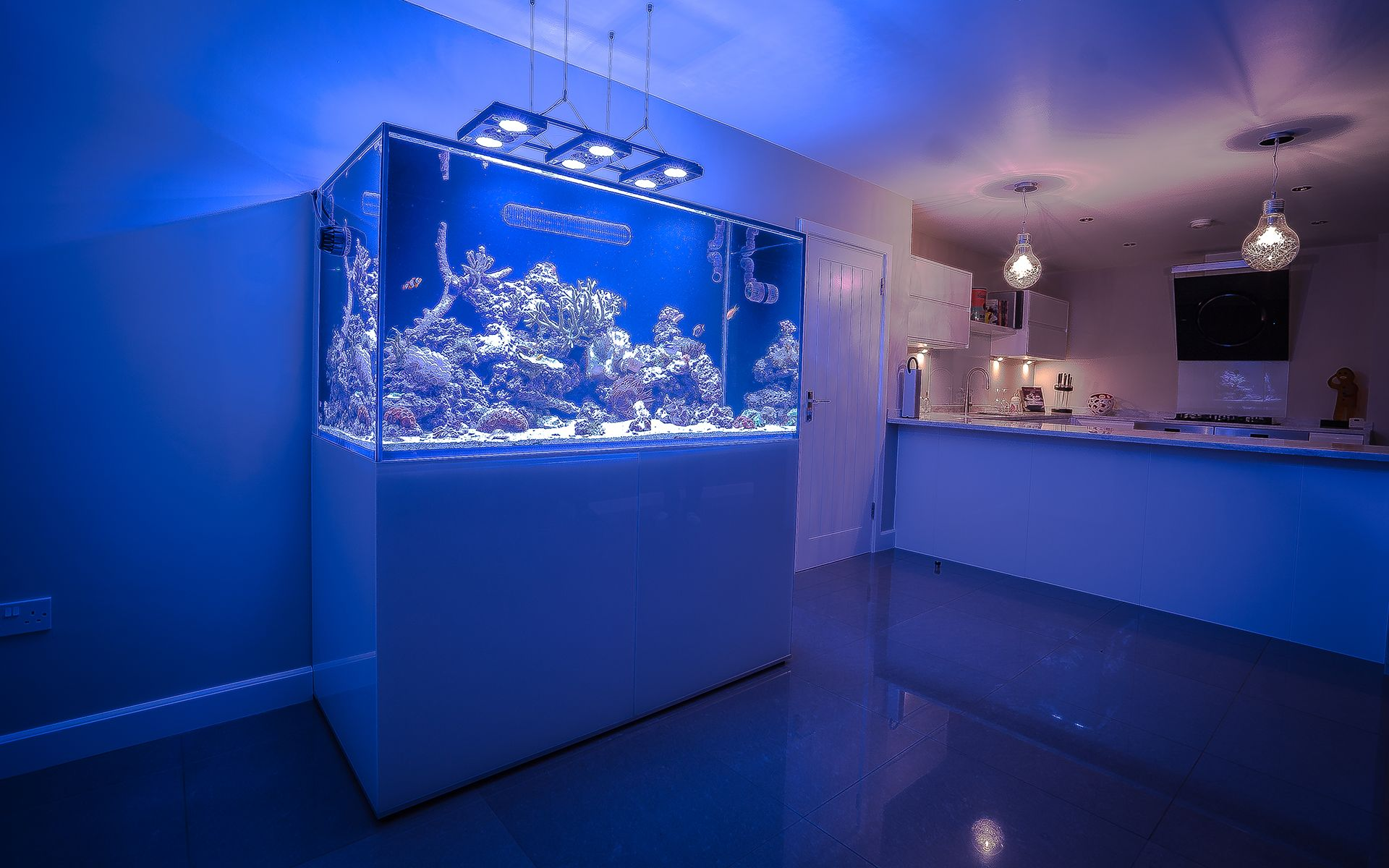 custom aquariums aquarium design installation free