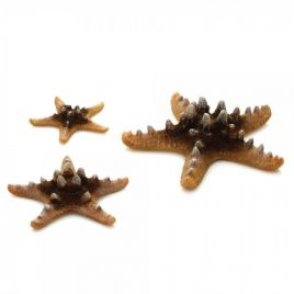 Biorb Sea Stars - Natural